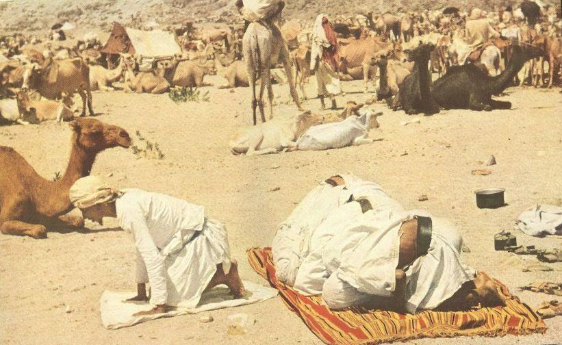 Hadžije klanjaju u blizini svojih kamila.