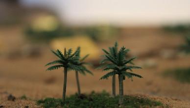 Makro fokus palmi sa velike makete.